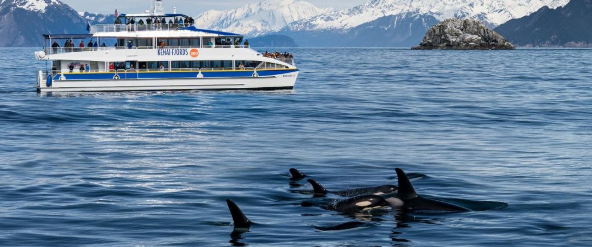 Major Marine Tours-Kenai Fjords