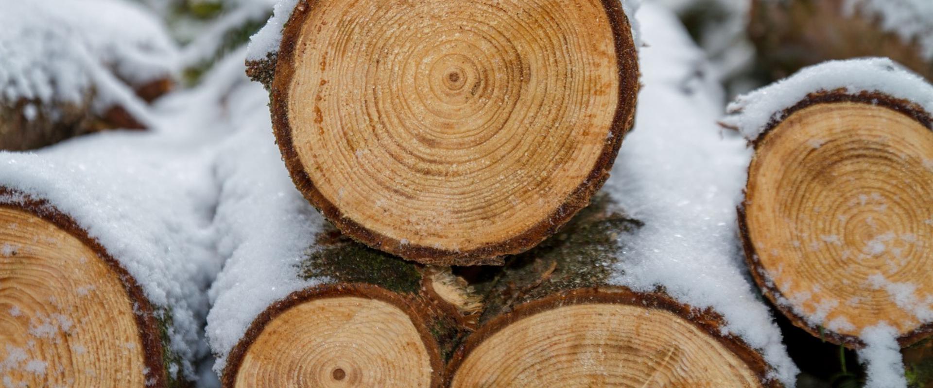 Doug Koch Professional Tree Service