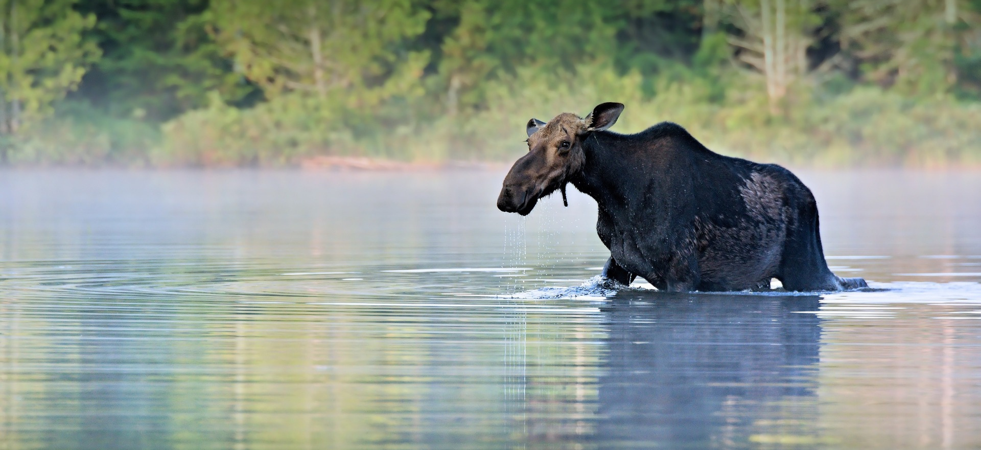 Moose River Resort, LLC